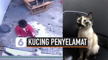 Detik-detik seekor kucing menjadi penyelamat seorang balita yang nyaris jatuh dari anak tangga rumah. Kejadian ini terekam kamera cctv rumah.