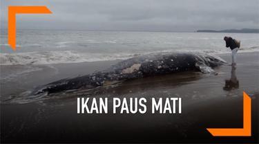 Seekor ikan paus abu-abu ditemukan mati terdampar di Pantai Limantour, California. Ini merupakan bangkai paus ke-13 yang ditemukan sejak 10 Maret 2019.