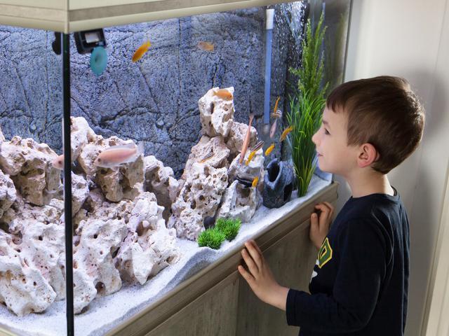 Cara Membuat Aquarium Unik Agar Sudut Ruangan Menjadi Lebih Hidup Lifestyle Liputan6 Com