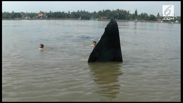 Seekor paus terdampar di pantai di daerah Situbondo, Jawa Timur. Fenomena ini menyedot perhatian warga.