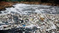 6 perairan ini disebut sebagai perairan paling berbahaya karena racun yang dikandung. Salah satunya di Indonesia