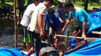 Lumba-lumba itu sudah sempat dipelihara warga selama satu hari sebelum akhirnya dilepaskan. (Liputan6.com/Mohammad Fahrul)