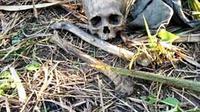 Warga Kabupaten Ogan Ilir Sumsel menemukan tengkorak manusia di kawasan perkebunan tebu PTPN VII Cinta Manis Ogan Ilir (Liputan6.com / Nefri Inge)