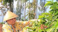 Menperin Airlangga Hartarto menghadiri panen raya kopi dan temu wicara pelaku usaha kopi di Temanggung
