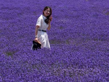 Seorang wanita mengunjungi ladang lavender di Wilayah Huocheng, Daerah Otonom Uighur Xinjiang, China (16/6/2020). Dengan lahan budidaya seluas 3.733 hektare, industri lavender di Wilayah Huocheng menciptakan 15.000 lebih lapangan pekerjaan pada 2019. (Xinhua/Zhao Ge)