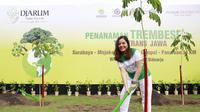 Tasya Kamila bersama Djarum Trees For Life melakukan penanaman Trembesi Tol Trans Jawa di Sidoarjo, Jawa Timur, Rabu (5/12/2018)
