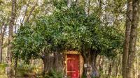 Potret replika rumah pooh. (dok. airbnb.com)