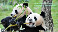 Setelah dipelajari selama 5 tahun, sejumlah ilmuwan Tiongkok mulai mengerti bahasa yang dipergunakan panda.