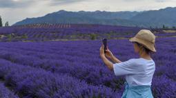Seorang pengunjung memotret ladang lavender di Sigong, sebuah desa di Lucaogou, Wilayah Huocheng, Daerah Otonom Uighur Xinjiang, China barat laut (16/6/2020). Industri lavender di Wilayah Huocheng memiliki nilai output tahunan sekitar 1,5 miliar yuan (1 yuan = Rp2.001). (Xinhua/Zhao Ge)