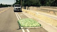 Penduduk di Bluffdale, Utah, dikejutkan dengan keluarnya benda mirip busa berwarna hijau (Facebook/Bluffdale City)