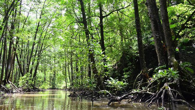 Ilustrasi Hutan Mangrove / Sumber: Pixabay