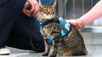 Bandara Internasional Dexter merekrut kucing sebagai bagian dari proram CATS yang dirancang untuk membantu menghilangkan stress dan kegelisahan (coloraadoan)