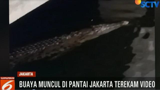Salah seorang saksi mata yang mengetahui informasi kemunculan buaya di pantai Jakarta mengaku was-was saat berwisata ke Pantai Ancol.