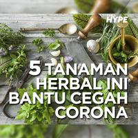 5 Tanaman Herbal Ini Bantu Cegah Corona