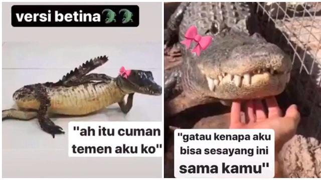10 Meme Buaya Darat Versi Betina Ala Netizen Ini Bikin Geleng Kepala Hot Liputan6 Com