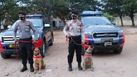 Dua anjing pintar dari Polda Sulteng yang dibawa ke Sulbar untuk membantu pencarian korban gempa di Mamuju dan Majene. (Foto: Humas Polda Sulteng).