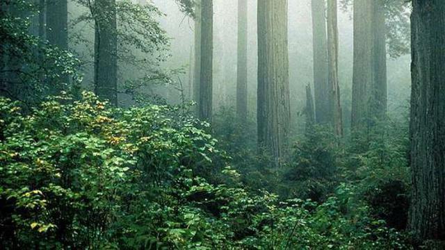 Hutan pohon redwood