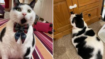Punya Kucing Rakus, Wanita Ini Terpaksa Kunci Lemari Agar Makanannya Tak Dicuri