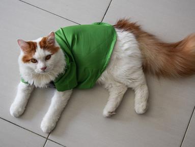 Seekor kucing mengenakan pakaian untuk hari raya Idul Fitri terlihat di sebuah apartemen di Shah Alam, di pinggiran Kuala Lumpur (5/5/2021). Pakaian kucing untuk Idul Fitri tersebut dibuat oleh Toko Meowku. (AFP Photo/Sam Reeves)