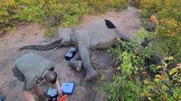 Kisah Gajah yang Terluka Akibat Diburu Ini Bikin Terenyuh. (Sumber: Mirror)