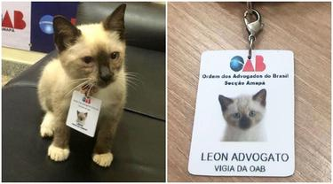 6 Potret Lucu Leon Avogato, Kucing Liar yang Jadi Karyawan di Firma Hukum