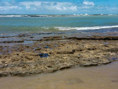 Gambar yang dirilis pada 7 Oktober 2019 memperlihatkan minyak tumpah di pantai Pontal de Coruripe di Coruripe, negara bagian Alagoas, Brasil. Tumpahan minyak yang telah mengering sejak beberapa pekan terakhir telah mencemari 132 pantai di kawasan timur laut Brasil. (HO/IBAMA/AFP)