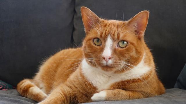 40 Nama Lucu Kucing Betina Mudah Diingat Dan Menggemaskan Ragam Bola Com