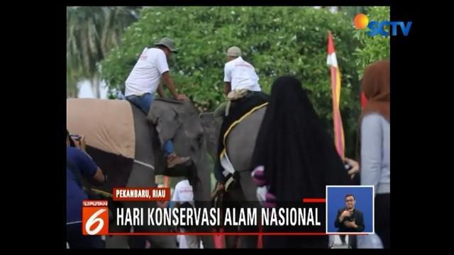 Serunya pelaksanaan car free day di Pekanbaru, Riau, karena dihibur dengan hadirnya gajah. Kegiatan tersebut sekaligus dalam rangka memperingati Hari Konservasi Alam Nasional.