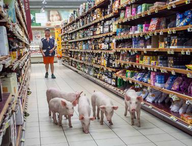 20150820-Petani Berdemo Bawa Babi Masuk Supermarket-Prancis