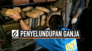 Badan Narkotika Nasional berhasil gagalkan upaya penyelundupan ganja seberat 500 kilogram di Pelabuhan Tanjung Priok hari Senin (13/8/2019).