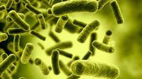 Bakteri adalah mikroorganisme tak kasat mata yang bisa menyebabkan berbagai macam penyakit.
