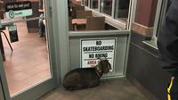 Seekor anak kambing bersikeras tinggal di pintu masuk suatu restoran siap saji sehingga mengundang kerepotan pihak yang berwajib.