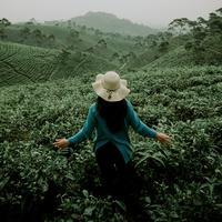 ilustrasi perempuan di kebun teh/Photo by kudung setiawan on Unsplash