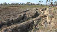 Lahan pertanian di Desa Lero, Sigi yang rusak terdampak gempa dan kekeringan, Selasa (18/2/2020). (Foto: Liputan6.com/ Heri Susanto)