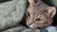 Ilustrasi kucing tidur sembunyi. (Shutterstock)
