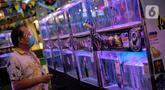 Seorang pengunjung mengamati ikan Louhan saat kontes ikan di Mal Tangcity, Kota Tangerang, Kamis (24/9/2020). Sebanyak 300 ikan Louhan berbagai ukuran dari Jabodetabek, Surabaya, Bandung, Sumetera, Kalimantan diikutsertakan dalam kontes tersebut. (Liputan6.com/Angga Yuniar)