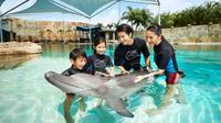Rasakan serunya berinteraksi langsung dengan lumba-lumba di Dolphin Island, Resorts World Sentosa, Singapura. Sumber foto: www.rwsentosa.com.