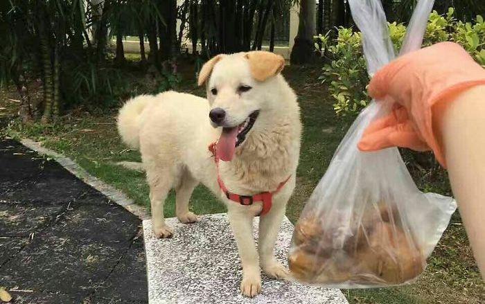 Pria Baik Hati Selamatkan Anjing Yang Dijual Untuk Dimakan Citizen6 Liputan6 Com