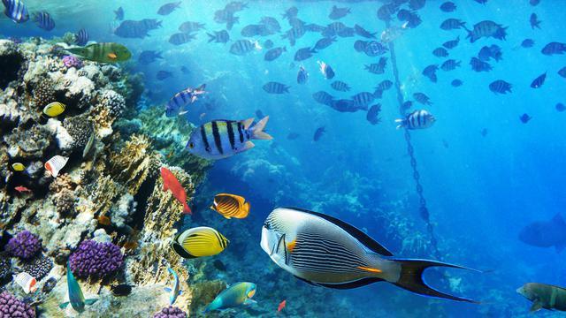 6000 Koleksi Contoh Gambar Ilustrasi Hewan Laut Terbaik