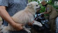 Warga membawa anjing peliharaannya untuk disuntik vaksin anti rabies di Kelapa Dua Wetan, Ciracas, Selasa (8/1). Suku Sudin KPKP Jakarta Timur menggelar sosialisasi rabies dan vaksinasi bagi anjing dan kucing. (Merdeka.com/Imam Buhori)