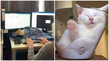 10 Potret Ini Buktikan Kucing Mampu Tidur di Mana Saja, Nyaman Banget