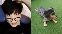 Jonghyun SHINee dan anjing kesayangannya, Roo [foto: instagram/jonghyun.948]