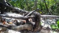 Mahasiswa biologi dan kelautan dikejutkan dengan penemuan di wilayah hutan bakau