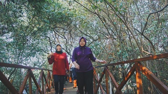 9 Lokasi Di Surabaya Ditanam Pohon Cemara Udang Apa Saja Manfaatnya Surabaya Liputan6 Com