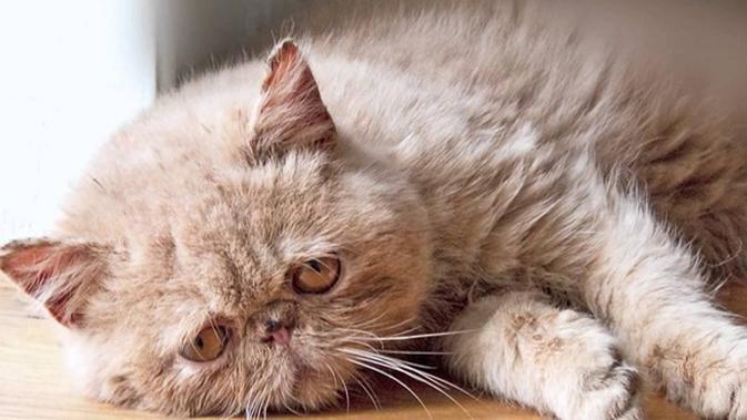 Download 93+  Gambar Kucing Yg Sedih Paling Imut HD