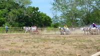 Lomba untuk melestarikan karapan sapi di Gorontalo. (Liputan6.com/Aldiansyah Mochammad Fachrurrozy).
