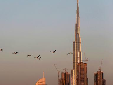 Burung flamingo terbang bermigrasi melewati gedung tertinggi di dunia, Burj Khalifa di Dubai, Uni Emirat Arab (28/1). Meski terdiri dari gedung-gedung mewah, pemerintah Dubai tetap menjaga habitat burung flamingo. (AP Photo / Kamran Jebreili)