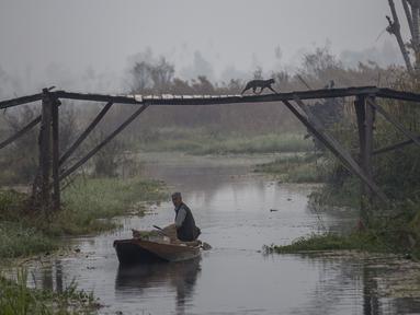 Seekor kucing melintasi jembatan pejalan kaki saat seorang pria Kashmir mendayung perahu membawa sayuran setelah membelinya dari pasar sayur terapung di Danau Dal di Srinagar, Kashmir yang dikendalikan India (18/10/2020). (AP Photo/Dar Yasin)