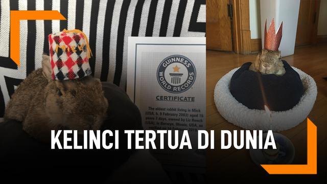 Mick, Si Kelinci Usia 16 Tahun Tertua di Dunia