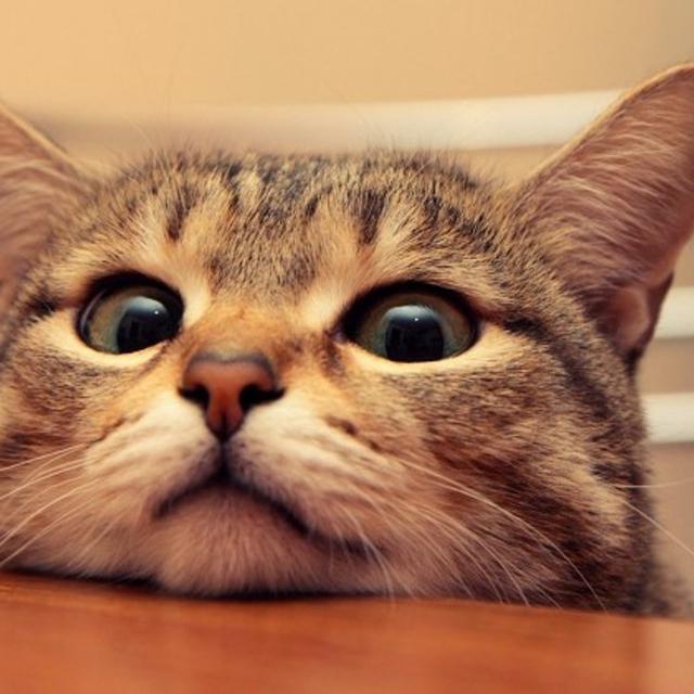 Download 93+  Gambar Kucing Senyum Terbaik HD